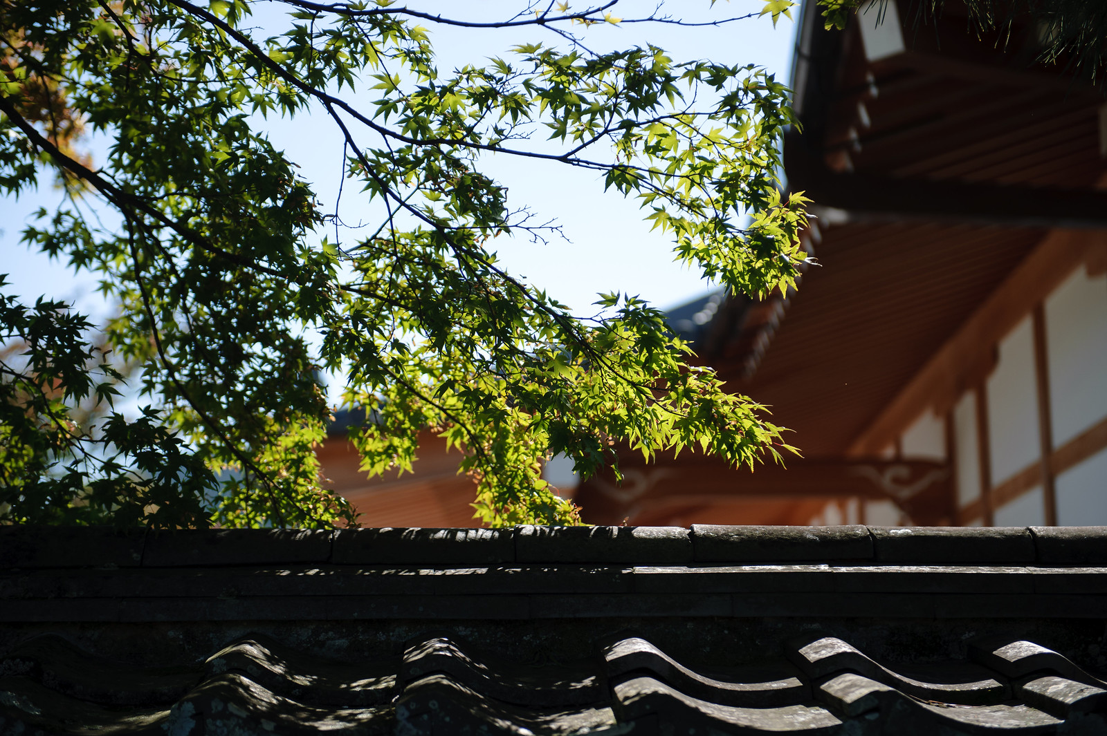2015VQ@Kyoto-346