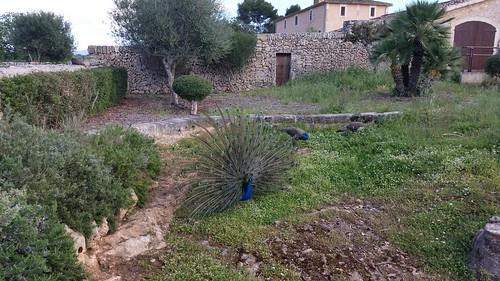 25961250603 102201a917 Tag 6, Cuevas del Drach