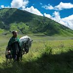 The Horseman in Savana Field, Bromo