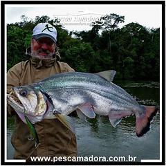 Ruy Varella, apresentador do Ases da Pesca na FishTv e staff da revista pesca esportiva com uma linda cachorra larga do rio Guapore  #pescaesportiva #sportfishing #fishing #flyfishing #fish #bassfishing #pescador #araguaia #guapore #cachorra #cachorralarg