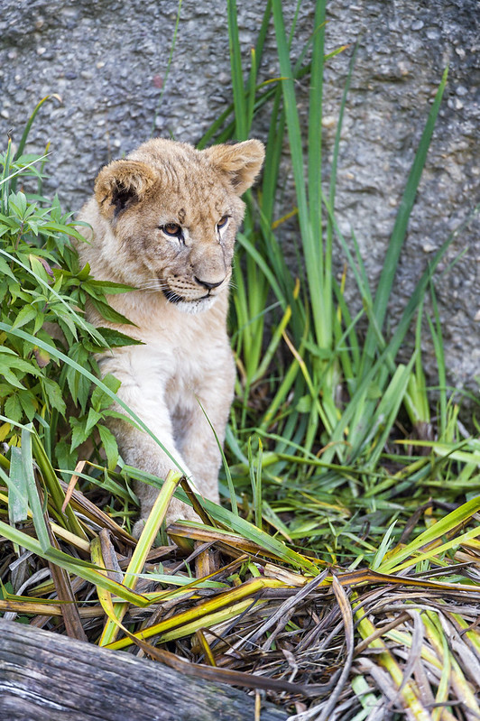 Cub among the plants