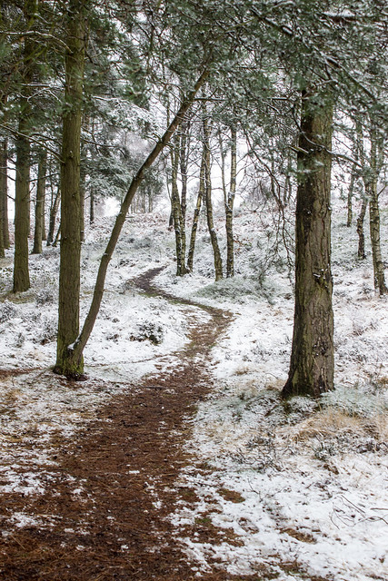 Snow scene, Cannock Chase forest