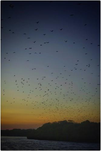 sunset indonesia asia flyingfox pulau komodo fruitbat 2016 kalong rinja tomfrohnhofer