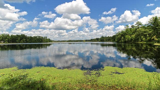 Duffies Pond (South Carolina)