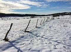 Pâtures sous la neige...
