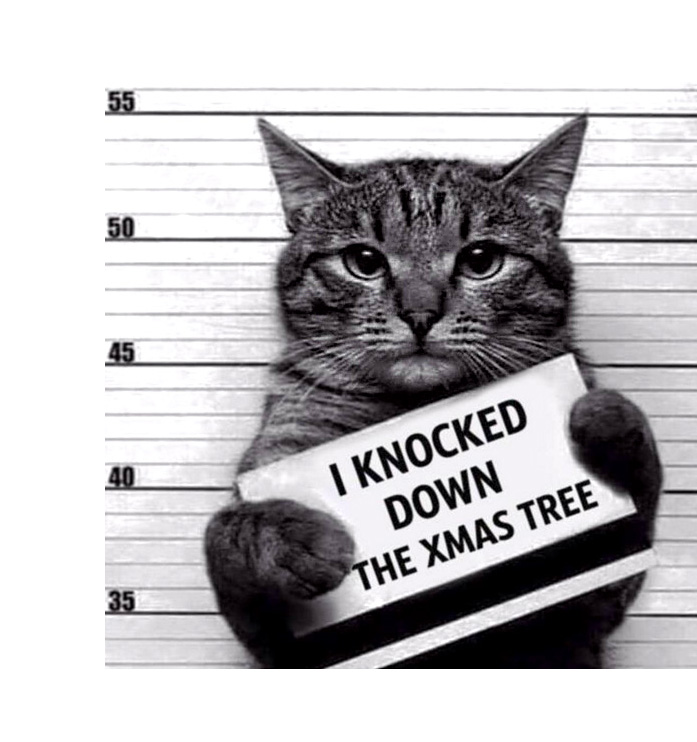 i hate cat