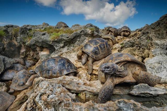 tortugascuevas