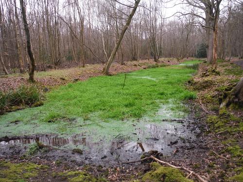 Seasonal Pond in Old Grove, Wormley Wood