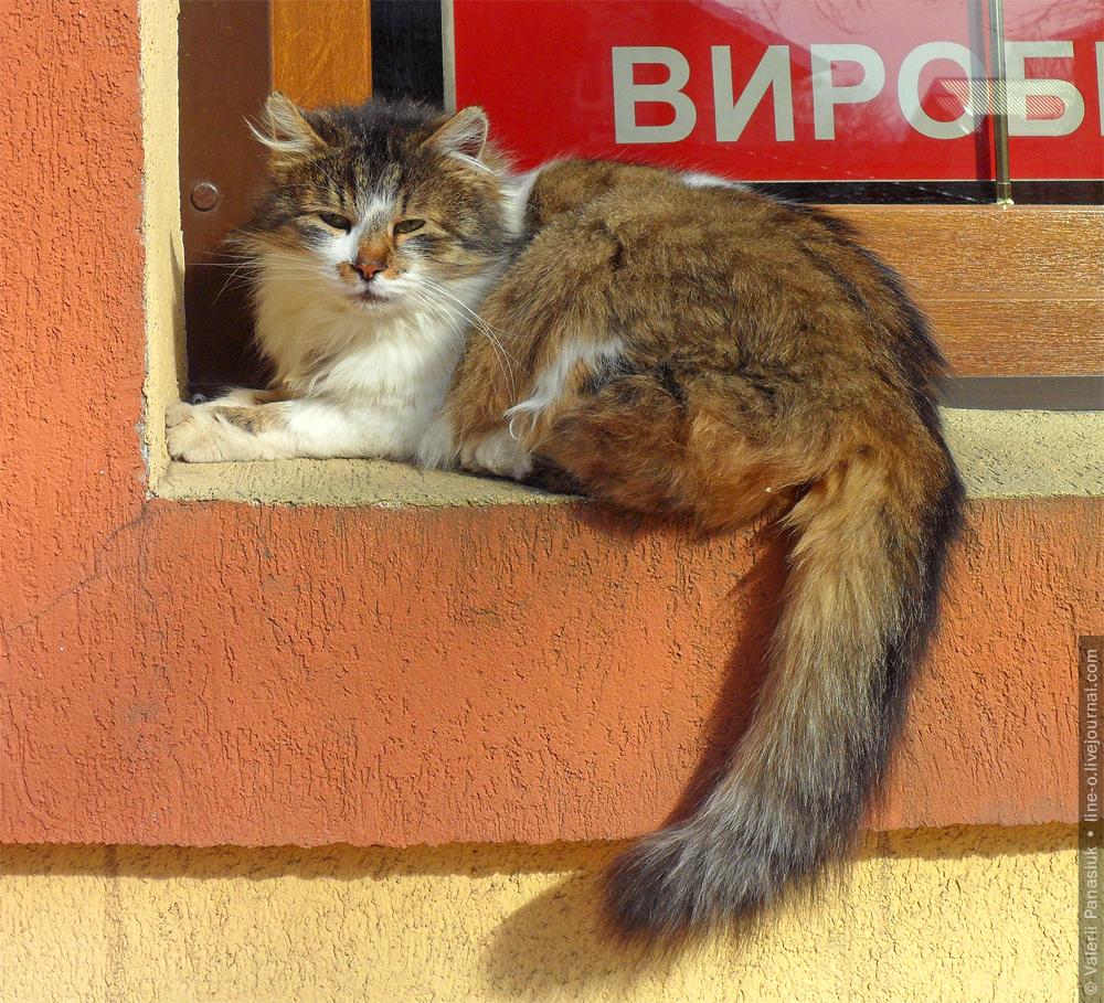 20160306_novik_cat_002