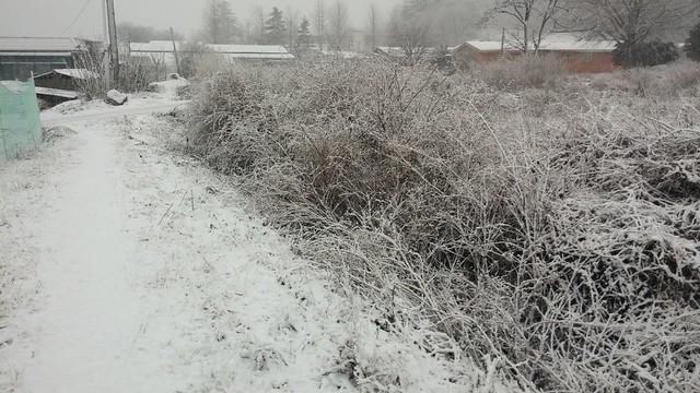 시골집 풍경:봄눈이 펑펑