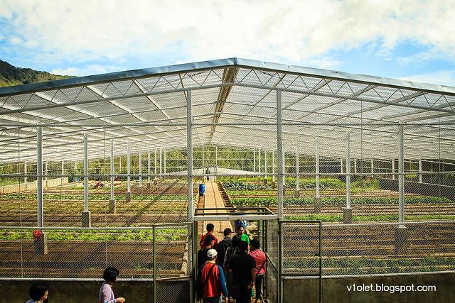 Simalem Greenhouse1-1627rw