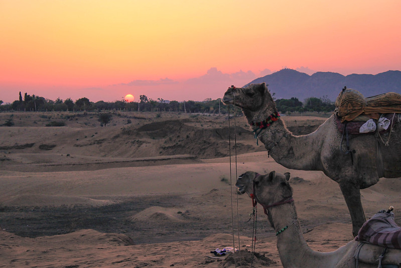 Racing a camel across the desert in Rajasthan, India