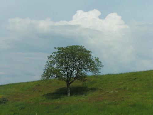 20080513 22524 0903 Jakobus Baum Wiese Wolken