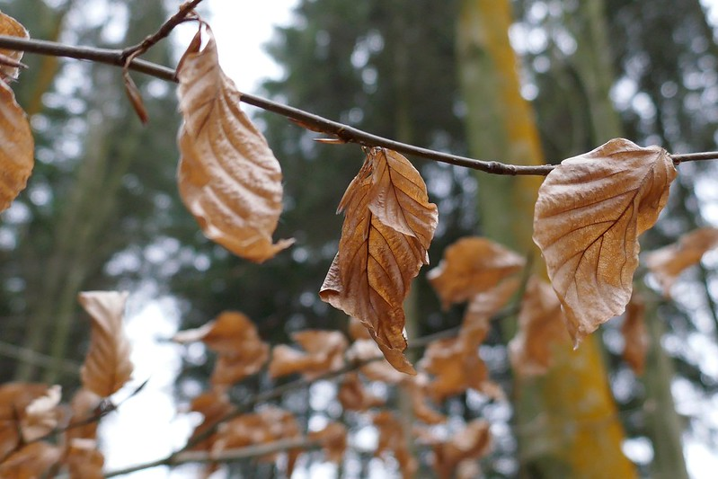Three dry leaves in 4k post focus