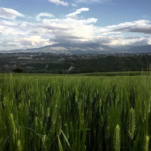 #abruzzo #wheat #frumento #maiella #clouds