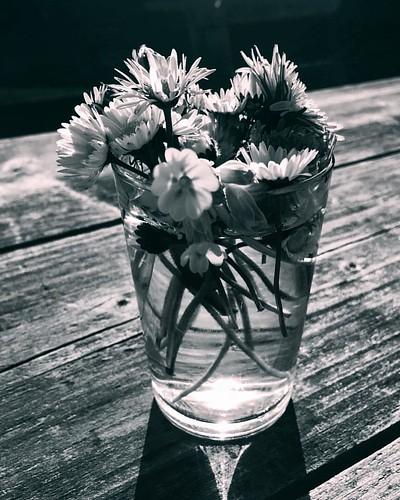 #germany #deutschland #thüringen #turingia #bleicherode #spring #springtime #frühling #flowers #flower #floweroftheday #flowerstagram #me #i #throwback #nature #naturelovers #naturephotography #glasses #glass #spiegel #reflection #reflections #monochrome