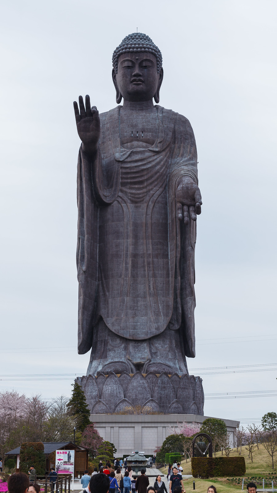20160412_01_large statue of Buddha & Cherry Blossoms Phlox subulata