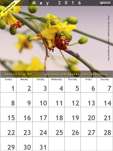 May 2016 Calendar: Joshua Tree National Park @JoshuaTreeNPS #FindYourPark