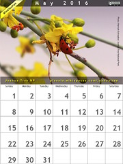 May 2016 Calendar: Joshua Tree National Park @JoshuaTreeNPS @NatlParkService #FindYourPark