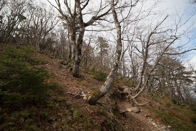 20141123-大峰山-0148.jpg