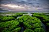 Green Beach Rancabuaya