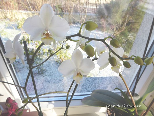 Januar 2016 in Haus und Garten