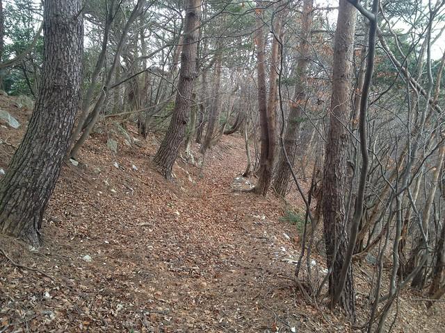 小島山 登山道