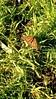 Monarch by RaviPurpuri