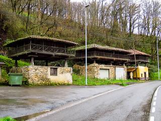 Camino Primitivo - 1 Oviedo-Grado (90)