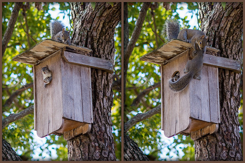 Mamma Squirrel Babies first climb.