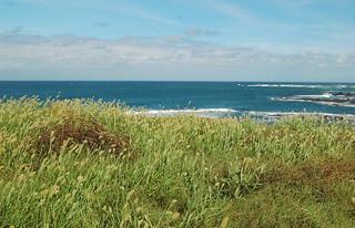 Pacific shores