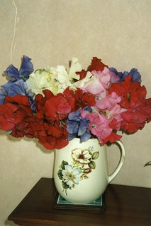 Garden Sweet Peas, Greenbank 2002