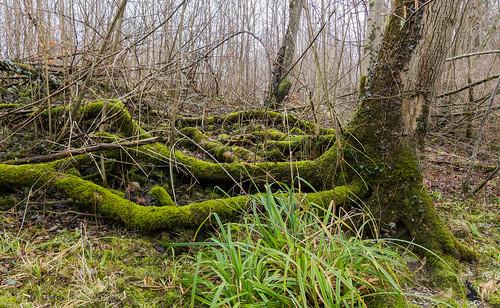 trees plant nature forest landscape schweiz sony natur pflanzen landschaft wald bäume thur ch sanktgallen oberbüren sigma1020mmf35exdchsm slta77 brübachsg