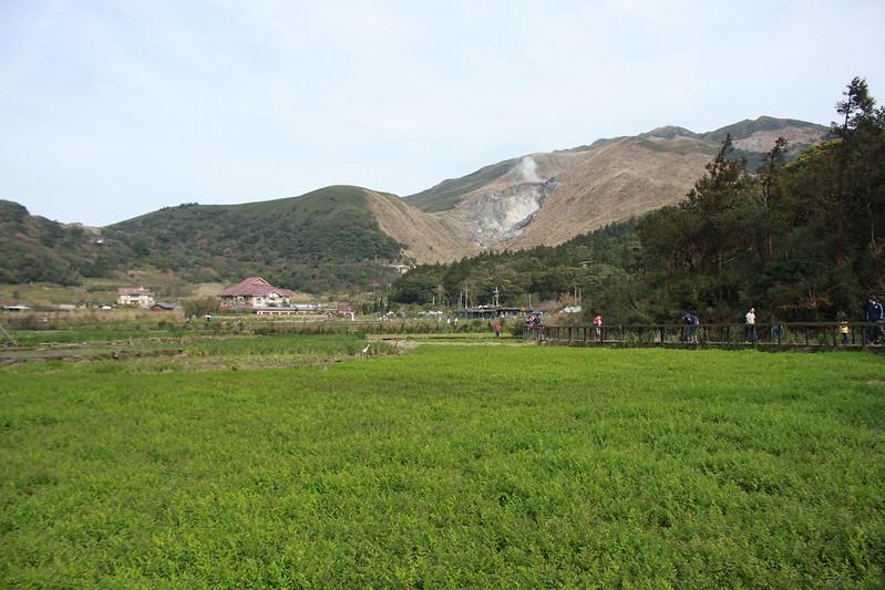 竹子湖採海芋-17度C隨拍 (6)