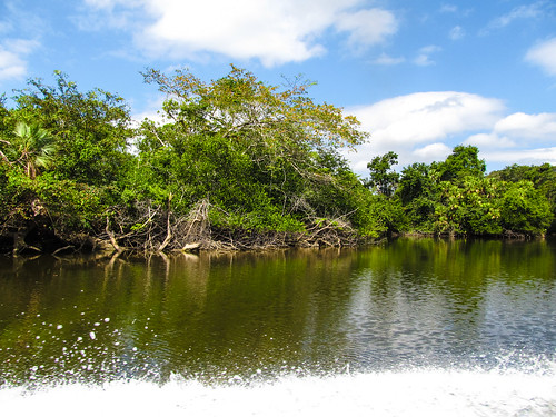 The New River entre Orange Walk et Lamanai