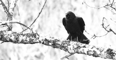 In my dream, the Crow spoke to me....