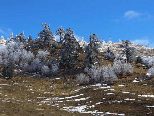δέντρα χιόνια βουνά βασιλίτσα σμίξη δίστρατο πασπαλισμένα μαυρόπευκα
