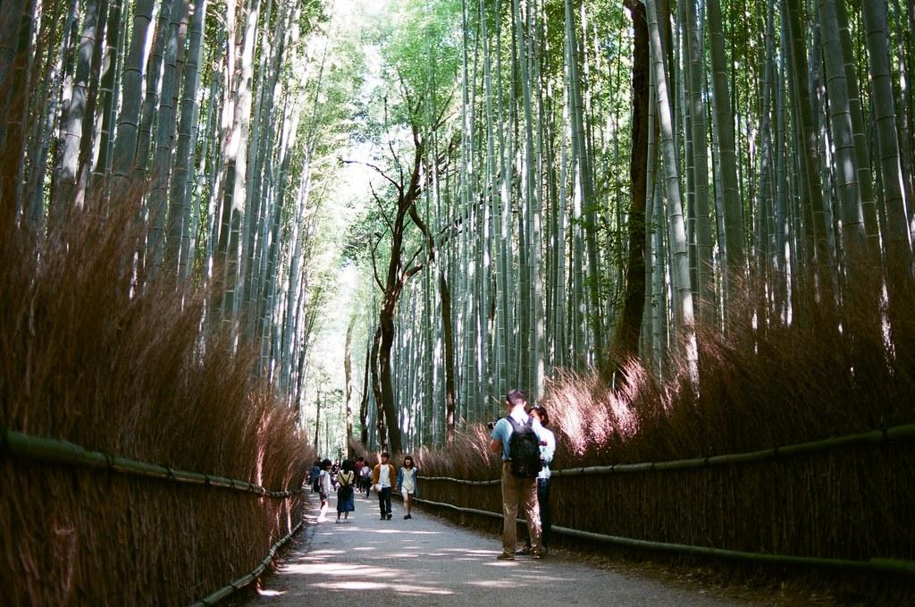 嵐山 竹林 京都 Arashiyama Kyoto, Japan / AGFA VISTAPlus / Nikon FM2 2015/09/28 後來我走進來竹林,周圍很多人,想要等一個沒有太多人的場景要等很久,那時候應該要早一點來的,雖然買了鏡頭之後就快快的坐車來這邊。  我記得那天天氣很好,陽光有點強,這裡我拍的很沒把握,因為光線的反差太大了,我抓不出個感覺來。  那時候我坐在地上等了好像 30 多分鐘,想等一個我理想的淨空的畫面。  沒想到我竟然等到認識的人!那時候一直在日本其實朋友都不意外,意外的是竟然還真的能遇到我,然後回台灣竟然成為在日本能遇到我的話題。  其實那時候我真的好感激能遇到你們,我才能短暫的跳出我的框框外。  Nikon FM2 Nikon AI AF Nikkor 35mm F/2D AGFA VISTAPlus ISO400 0990-0020 Photo by Toomore
