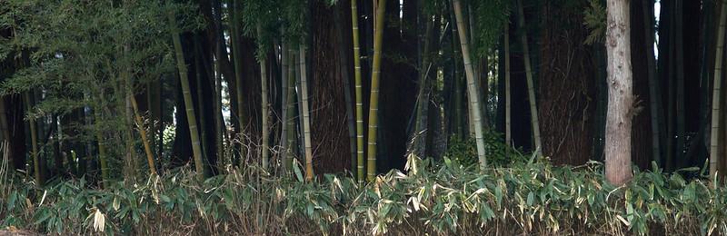 竹やぶ_2016-03-27