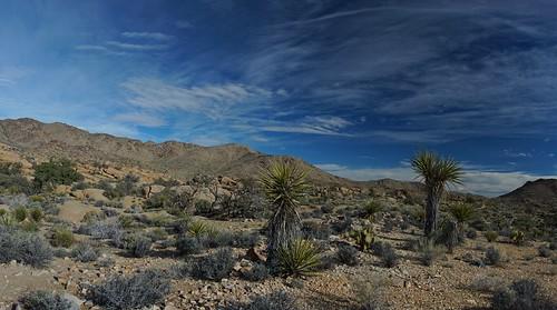 Desert #joshuatree