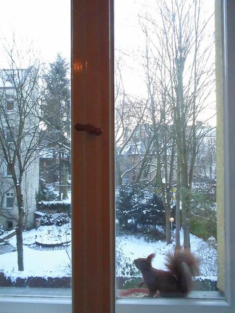Wintermorgen mit Eichhörnchen