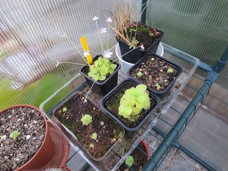 Plantas.werds.2012-2013 - Página 8 23981359146_b98ebe5aac_c