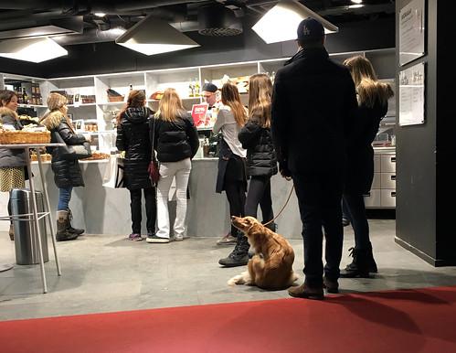 sverigexmas-dogstockholmIMG_2408