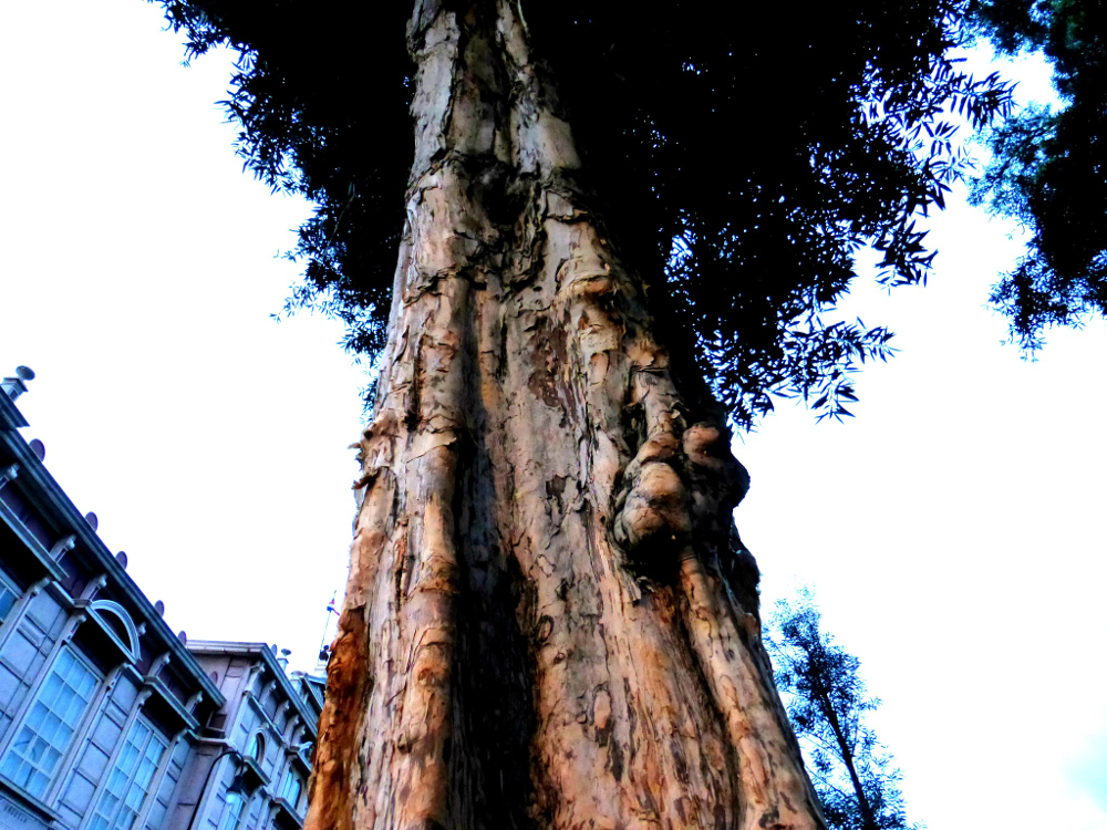 Cork Tree in San Jose City Center