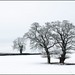 winter trees 9a by Philip Percival