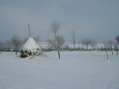 vis de iarnă/winter dream