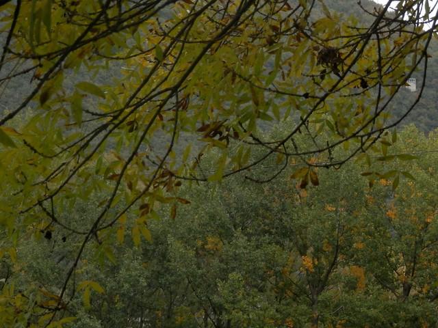Ramas y hojas en Biescas