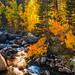 Sony A7RII Bishop California Fine Art Autumn Landscapes! Dr. Elliot McGucken Fine Art Landscape Photography!