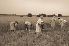 Põlluharimine