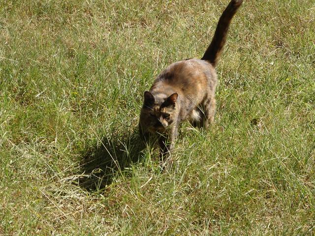 My cat, Dax